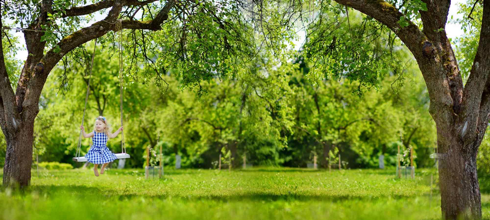 Nos arbres, les racines de notre histoire