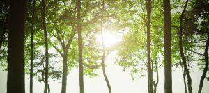 arbres feuillus
